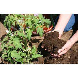Vermicompost For Gardening