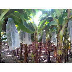Agriplast Banana Shield Banana Covers
