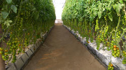 Mapal Soilless Growing Trough(Vegetables and floriculture)