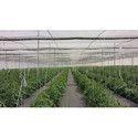 Optinet Blocks Insect Vision Ginegar Polysak Nets