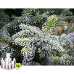 Idaho Blue Spruce Oil