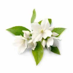 Jasmine Oil Grandiflorum