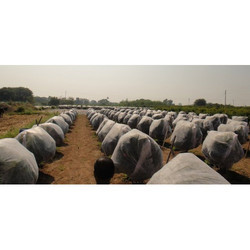 Crop Shield Crop Cover 17 GSM White 3.2 mtrs