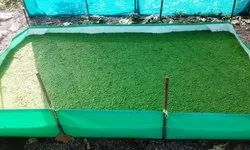 Azolla Bed 12x9x1 Size