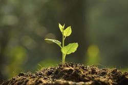 Rutmy Fertilizer