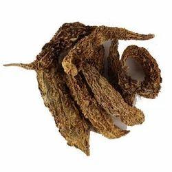 Karela,Bitter Gourd,hedychium spicatum