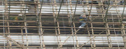 Apartment Shuttering Material On Hire