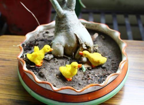 Miniature Bonsai Terrarium Decor Fairy Garden Planter