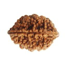 Two Faced Rudraksha Beads