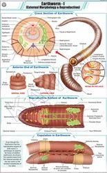 Earthworm I For Zoology Chart