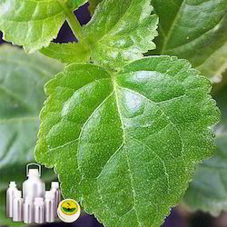 Patchouli Oil Certified Organic