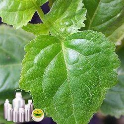 Patchouli Oil Certified Organic
