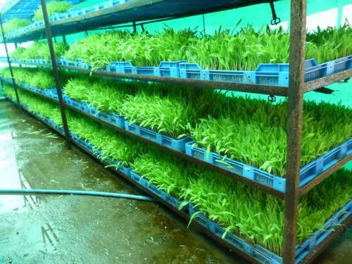 Hydroponic Amp Murgas Hydroponic System Manufacturer From