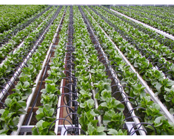 Automatic Drip Irrigation System