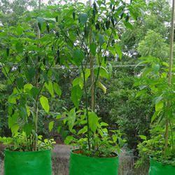 Eco Garden Grow Bags
