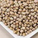 Tuvar Seeds