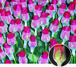 Rose Bud HDPE Net