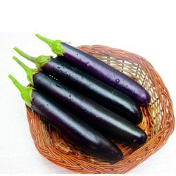 Brinjal Seed - Amar 10 (Hybrid)