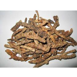 Kutki Picrorhiza Kurroa