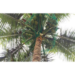 Coconut Safety Net