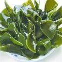 Kelp Extract