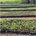 LDPE Nursary Gardening Bag