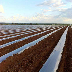 Ginegar Soil Solarization Film