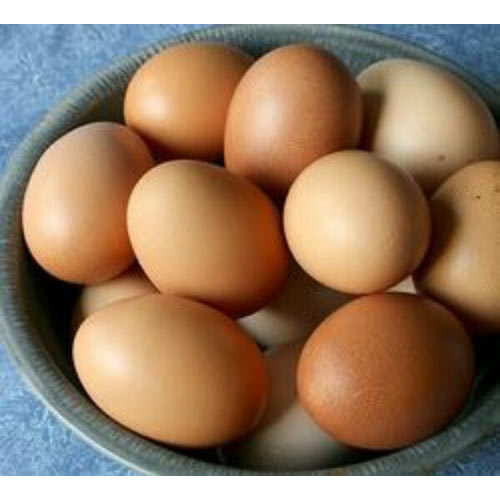 Kadaknath Chicken Egg - Wholesale Price & Mandi Rate for
