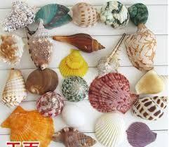 Natural Seashells