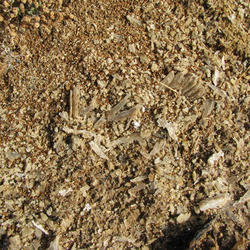 Marine Gypsum