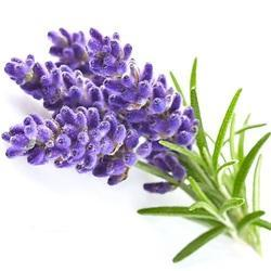 Lavender Oil Kashmir