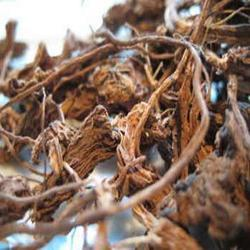 Coleus Root Extracts