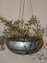 Galvanised Hanging Planter Bowl W/brass Welding