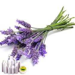 Lavender Oil French