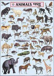 Animals For Gujarati Language Chart