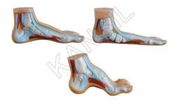 Flat & Arched Foot For Bones & Skeleton Model