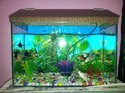 Nirjhar Aqua- For Aquariums