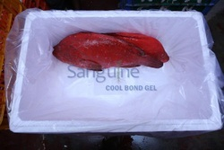 Fish Cool Bond Ice Gel Pack At -22 Degree