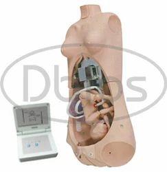 Maternal Simulator Torso