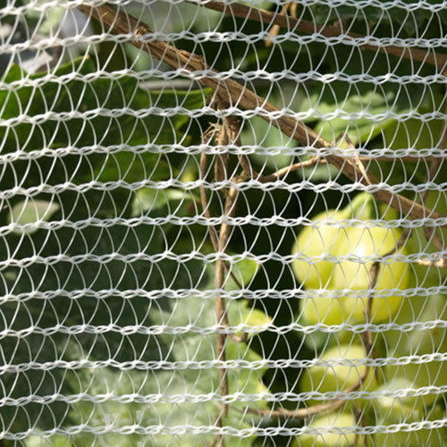Bird Netting Service Bird Netting For Garden Service Provider