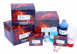 Rocket Immunoel Ectrophoresis Teaching Kit