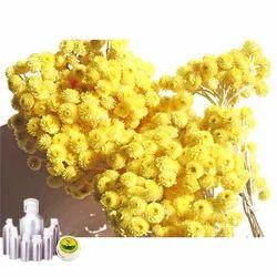 Helichrysum Oil