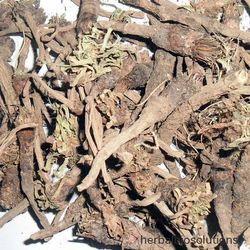 Akarkara Extract