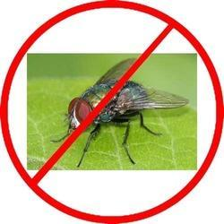 House Flies Control Service