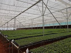 Fan And Pad Greenhouse With Rack And Pinion Screen Automation