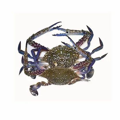 Frozen Sea Food - Frozen Blue Crab Wholesale Supplier from