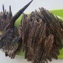 agarwood Apari SBAW0055
