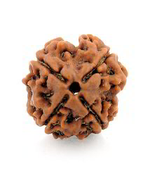Four Faced Rudraksha