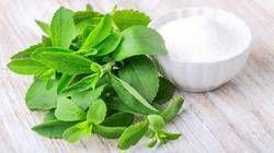 Stevia Contract Farming
