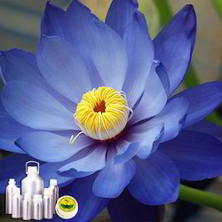 Blue Lotus Absolute Oil